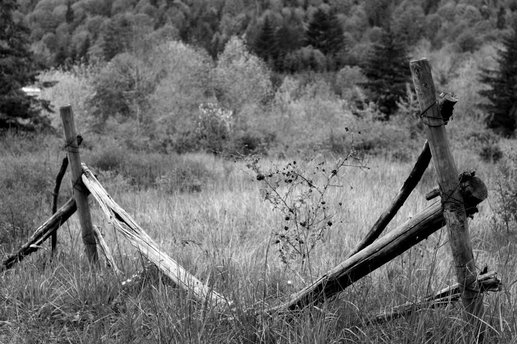 brokedown horse fence