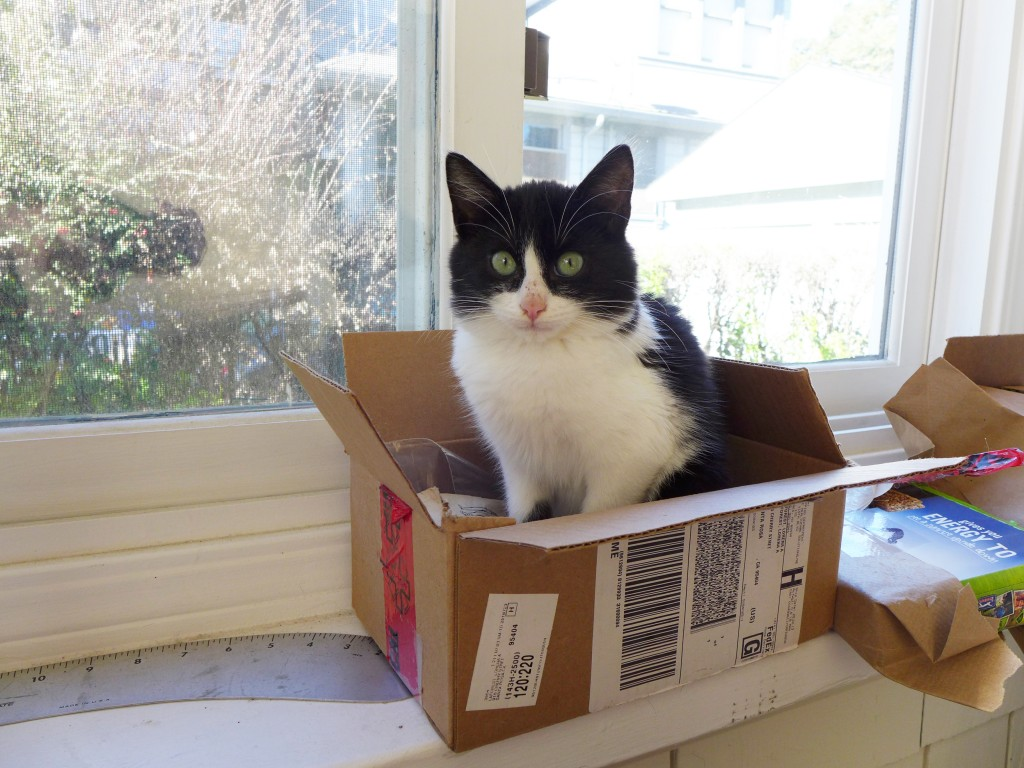 Geronimo in box