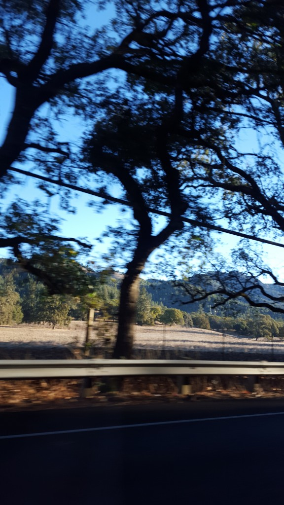 Sonoma tree