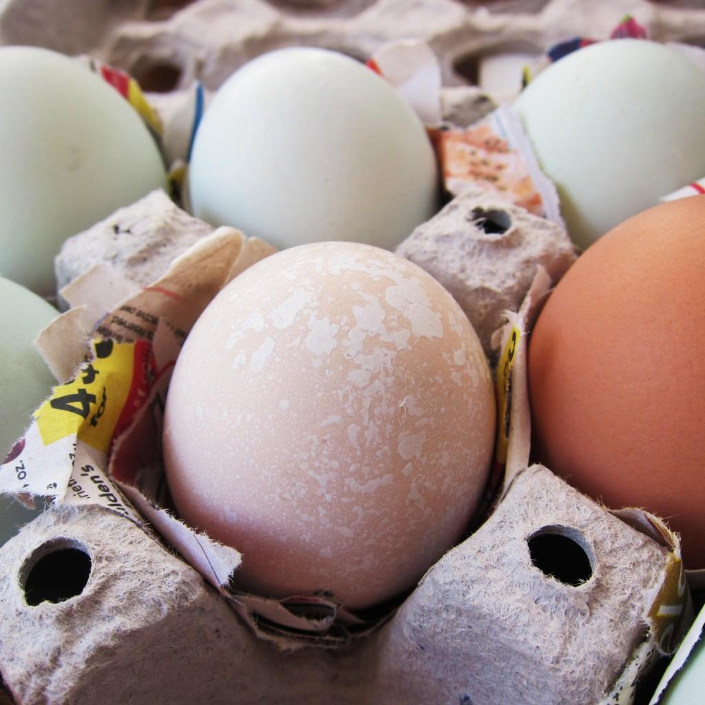 the beautiful eggs