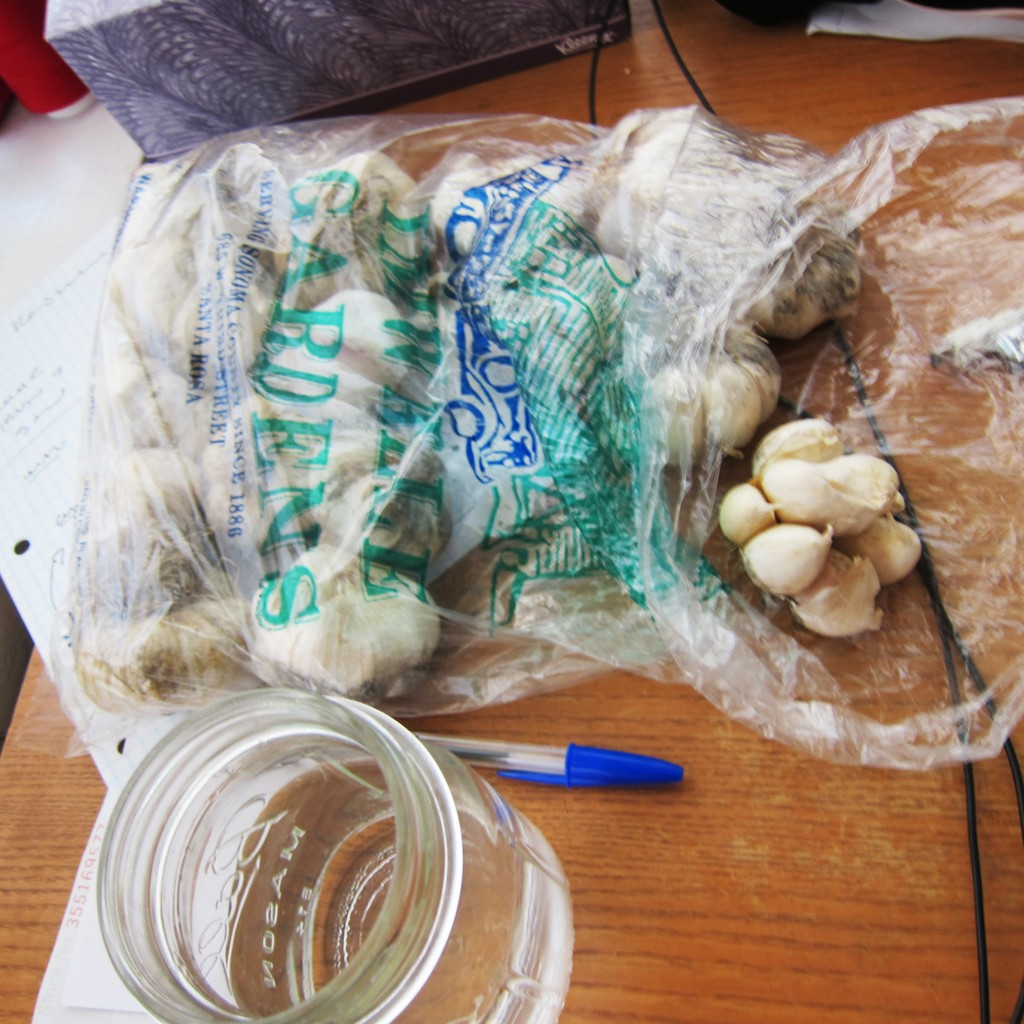an embarrassment of garlic
