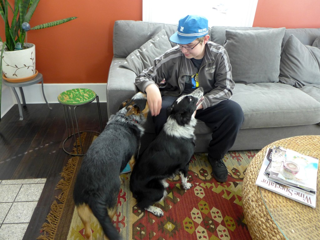 dogs hanging with Max