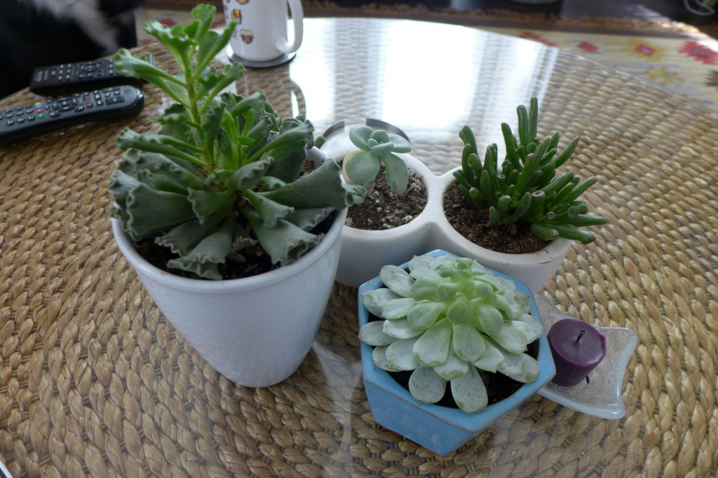 pretty succulents