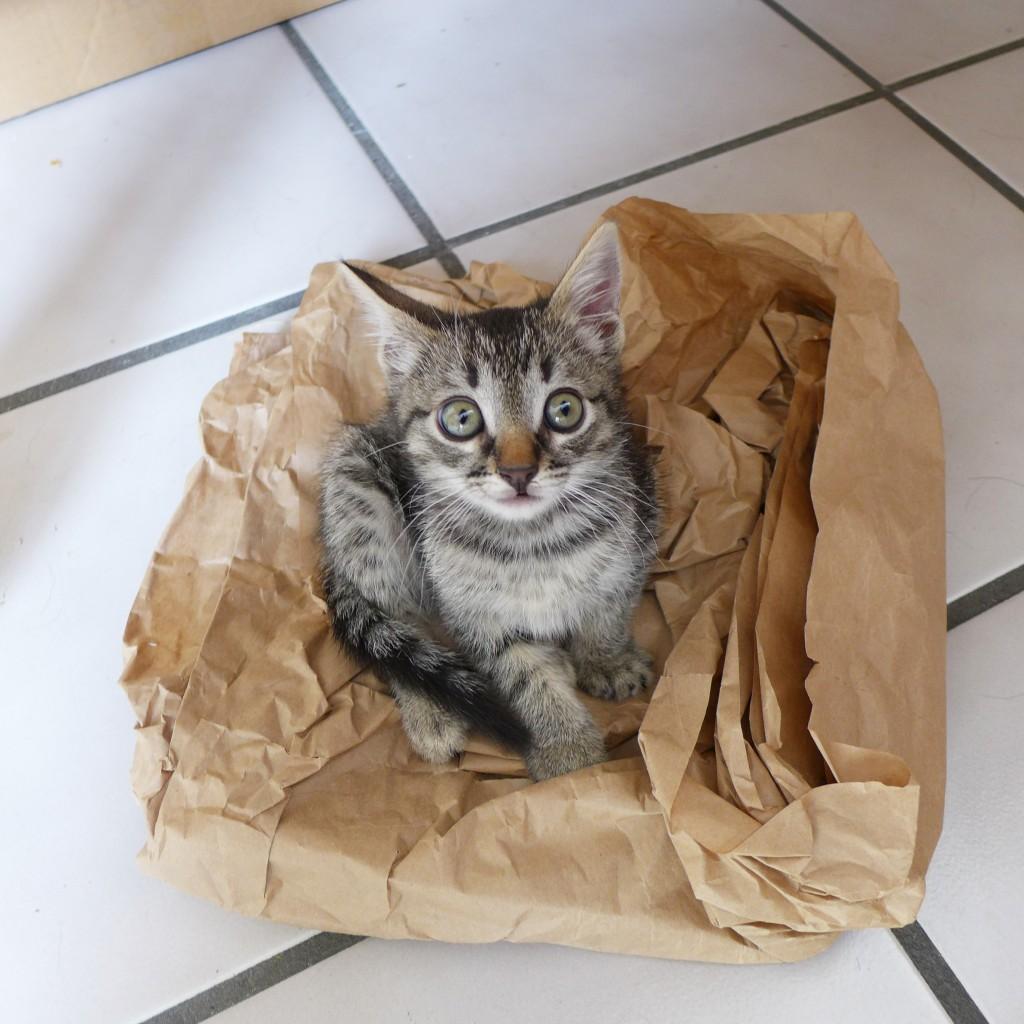 Kitten nest