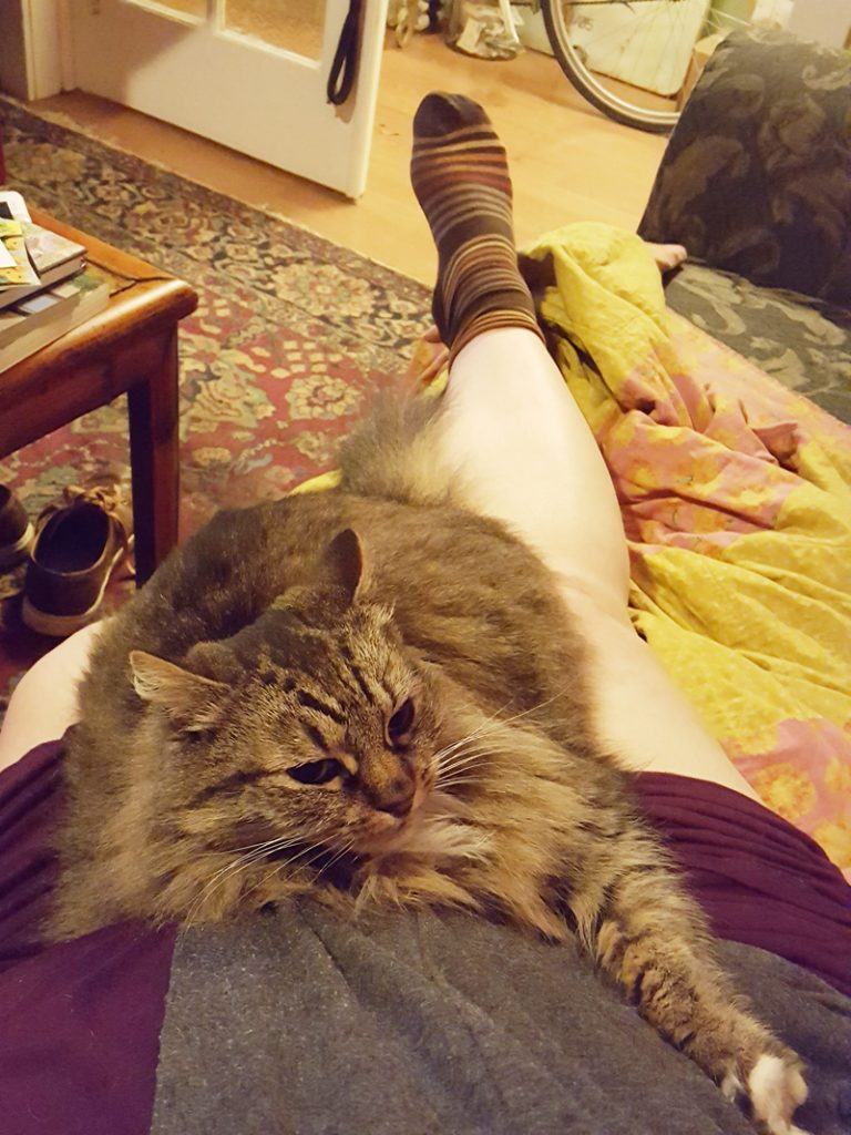 foot and cat on couch